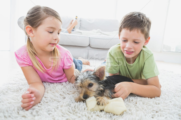 Siblings lying on rug with their yorkshire terrier puppy Stock photo © wavebreak_media