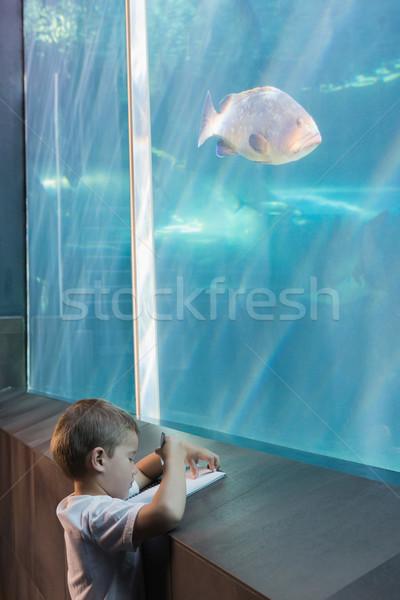 Küçük erkek bakıyor balık tank akvaryum Stok fotoğraf © wavebreak_media