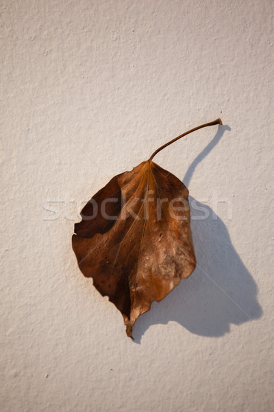 Overhead of autumn leave Stock photo © wavebreak_media