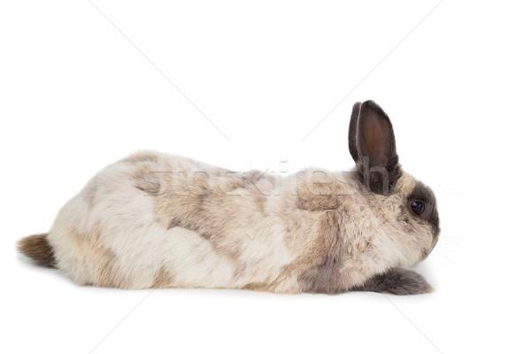 Mullido conejo blanco vista lateral vacaciones Foto stock © wavebreak_media