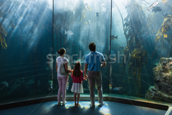 Family looking at fish tank Stock photo © wavebreak_media
