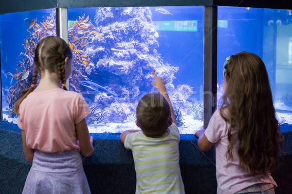 Cute ninos mirando peces tanque acuario Foto stock © wavebreak_media