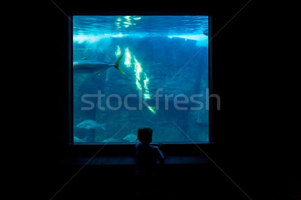 Young man watching fish in a darkest room  Stock photo © wavebreak_media