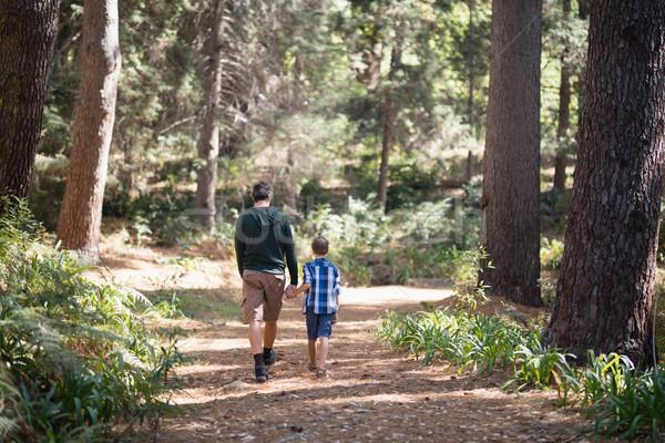 Apa fia sétál erdő napos idő hátsó nézet fa Stock fotó © wavebreak_media