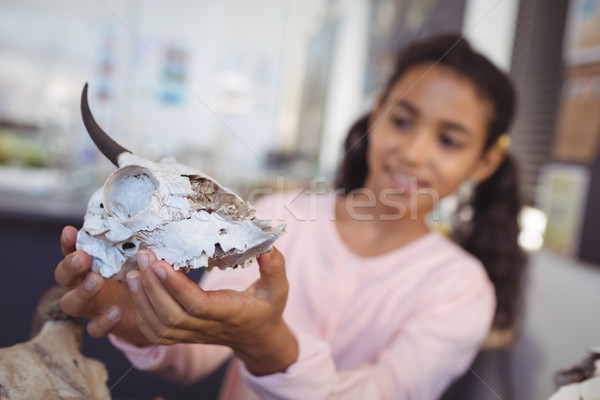 Elementary student examining animal skull Stock photo © wavebreak_media