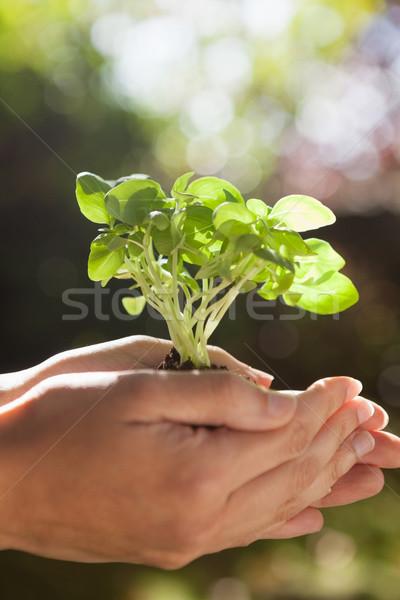 Eller fidan kadın Stok fotoğraf © wavebreak_media