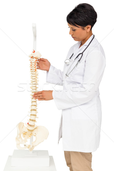 Side view of a female doctor holding skeleton model Stock photo © wavebreak_media