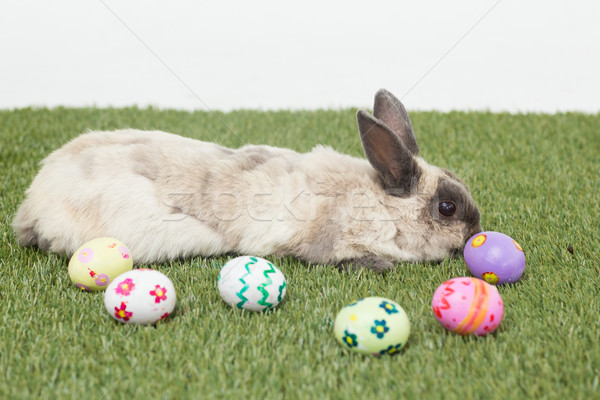 Stock photo: Rabbit with easter eggs on grass
