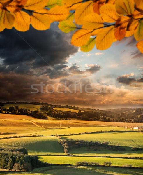 Composite image of autumn leaves Stock photo © wavebreak_media