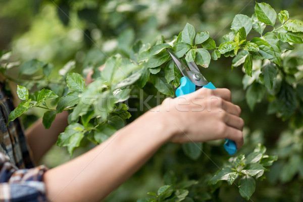 Imagen jardinero plantas femenino invernadero mujer Foto stock © wavebreak_media