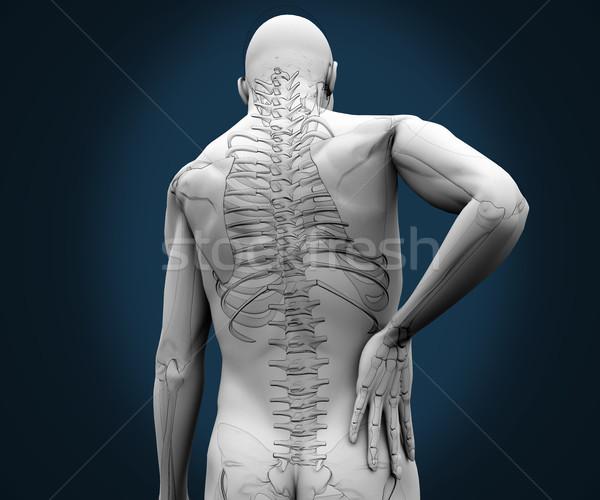 Skelet pijn Maakt een reservekopie Blauw lichaam model Stockfoto © wavebreak_media