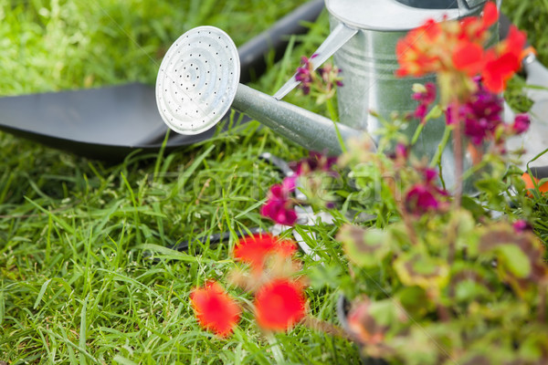 Spade and watering can by flowers at park Stock photo © wavebreak_media