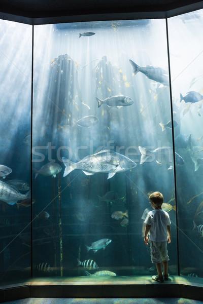 Peu garçon regarder poissons réservoir aquarium Photo stock © wavebreak_media