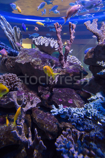 Fish swimming in a tank with coral Stock photo © wavebreak_media