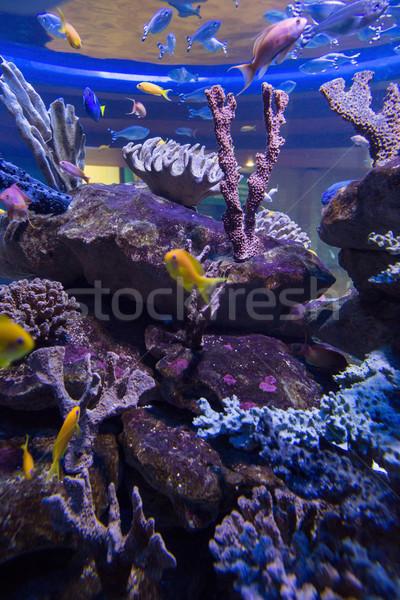 Hal úszik tank korall akvárium Stock fotó © wavebreak_media