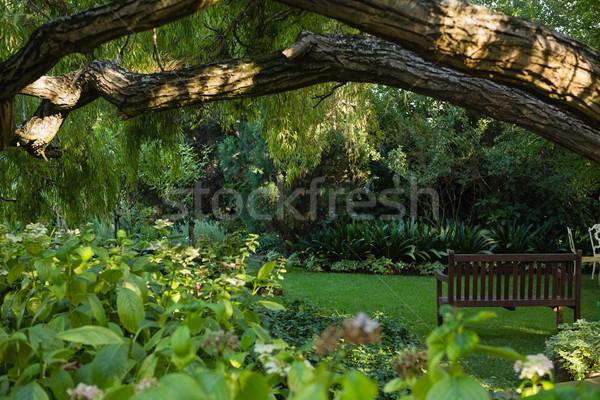 View of empty bench in garden Stock photo © wavebreak_media