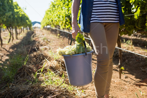 Low section of female vintner holding harvested grapes in bucket Stock photo © wavebreak_media