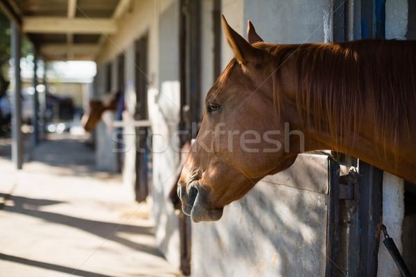Bruin paard stabiel liefde zomer Stockfoto © wavebreak_media