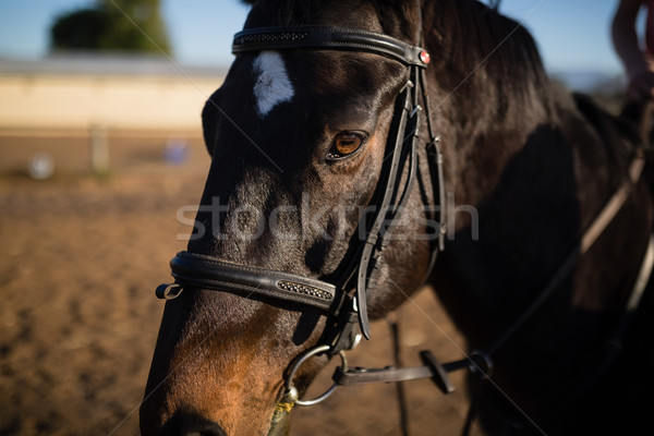 лошади сарай природы кожа тень Сток-фото © wavebreak_media