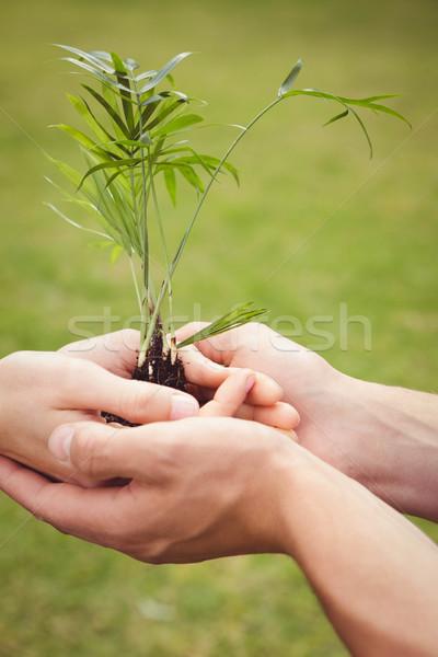 árbol joven primer plano mano hojas Foto stock © wavebreak_media