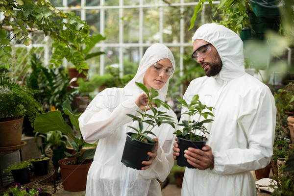 Scientists in clean suit examining potted plants Stock photo © wavebreak_media
