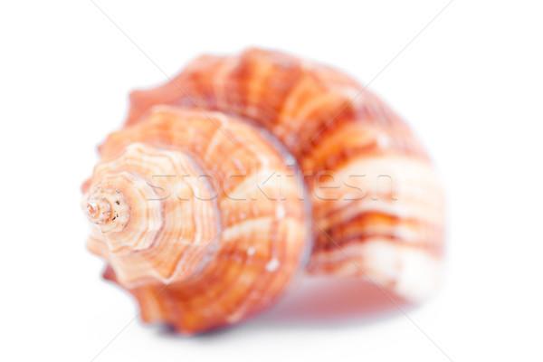 Schelpdier witte zand geluid spiraal Stockfoto © wavebreak_media