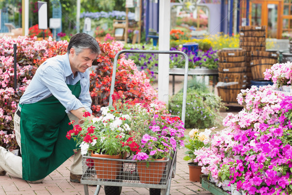 Employee unloading flowers from trolley in garden center Stock photo © wavebreak_media