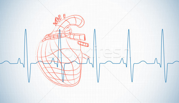 Drawn human heart and heart rate line Stock photo © wavebreak_media