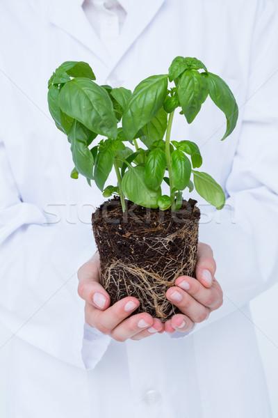 Médico albahaca planta blanco medicina atención Foto stock © wavebreak_media
