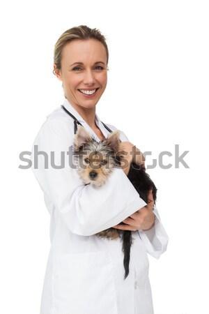 Veteriner küçük kedi ofis kadın Stok fotoğraf © wavebreak_media