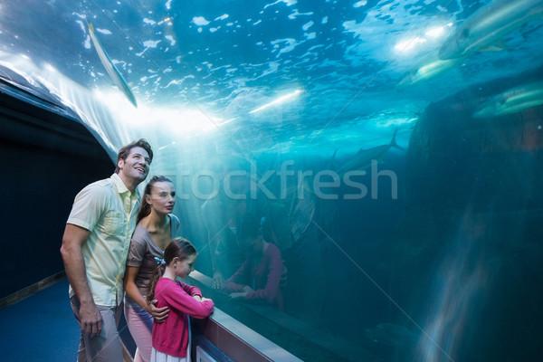 Família feliz olhando tanque aquário homem peixe Foto stock © wavebreak_media