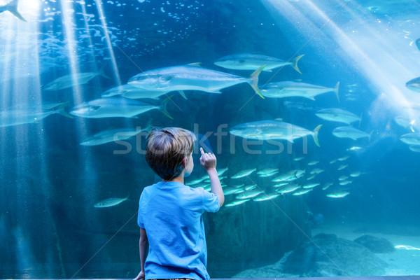 молодым человеком указывая рыбы цистерна пальца аквариум Сток-фото © wavebreak_media