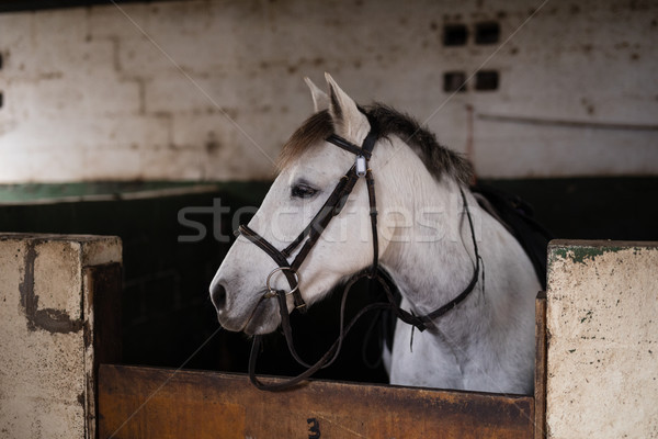 White horse стабильный древесины стены часы Сток-фото © wavebreak_media