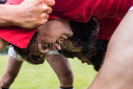 Rugby players doing a scrum Stock photo © wavebreak_media