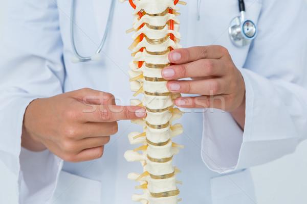 医師 ポインティング 解剖学の 背骨 白 ストックフォト © wavebreak_media