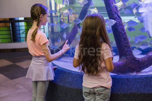 Cute enfants regarder poissons réservoir aquarium Photo stock © wavebreak_media