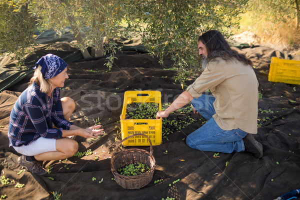 Couple interacting while collecting olives Stock photo © wavebreak_media