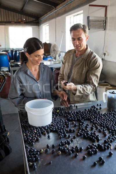 Workers checking a harvested olives in factory Stock photo © wavebreak_media