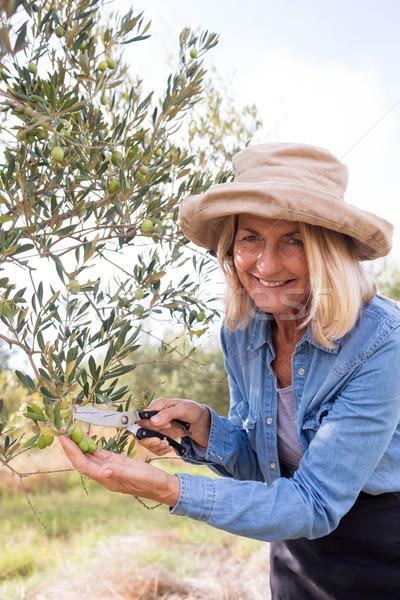 Portrait of happy woman pruning olive tree in farm Stock photo © wavebreak_media