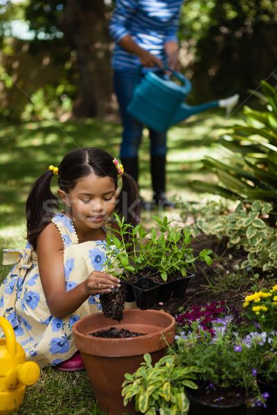 Lány ültet edény nagymama locsol növények Stock fotó © wavebreak_media