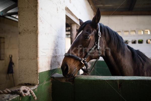 Vista laterale rosolare cavallo stabile muro clock Foto d'archivio © wavebreak_media
