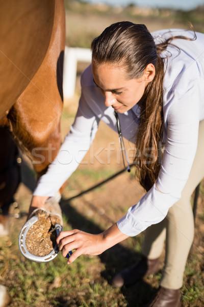 Női állatorvos megvizsgál ló csőr magasról fotózva Stock fotó © wavebreak_media