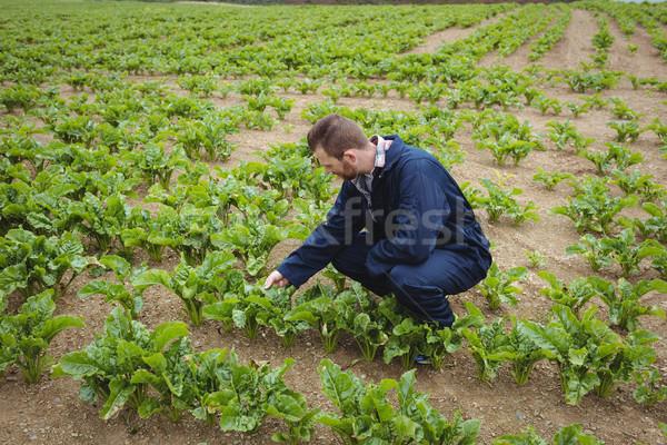 Rolnik dziedzinie psa człowiek Zdjęcia stock © wavebreak_media