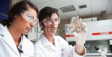 Concentrate science students looking at Petri dish in a laboratory Stock photo © wavebreak_media