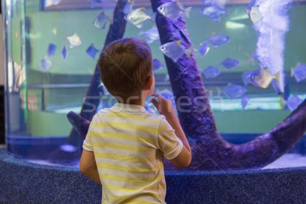 Sevimli erkek bakıyor balık tank akvaryum Stok fotoğraf © wavebreak_media