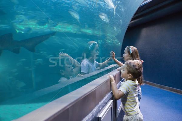 Kicsi testvérek néz hal tank akvárium Stock fotó © wavebreak_media