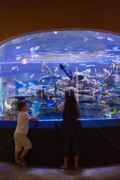 Küçük kardeşler bakıyor balık tank akvaryum Stok fotoğraf © wavebreak_media