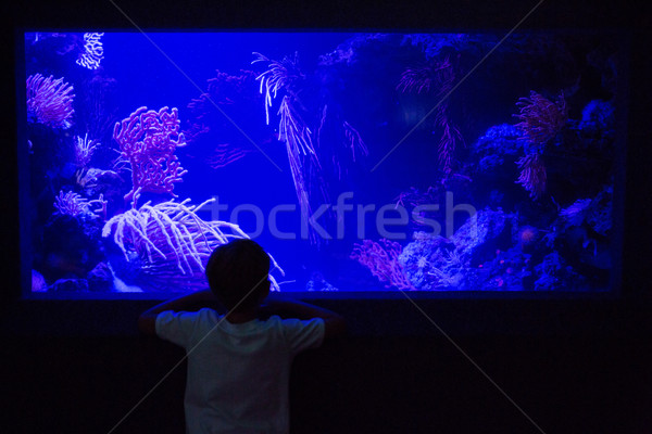 Young man looking at algae tank in a darkest room Stock photo © wavebreak_media