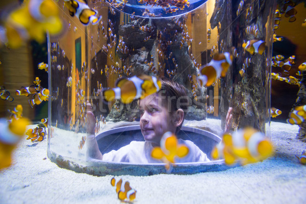 Fiatalember néz hal körkörös tank akvárium Stock fotó © wavebreak_media