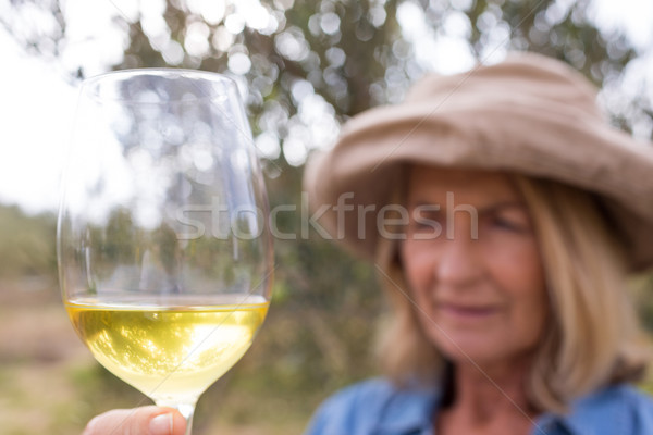 Woman looking at glass of wine in olives farm Stock photo © wavebreak_media